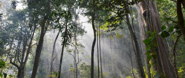 Parque Nacional Khao Yai