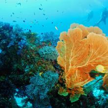 Snorkel en Similan