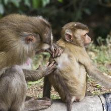 Monos en Khao Yai
